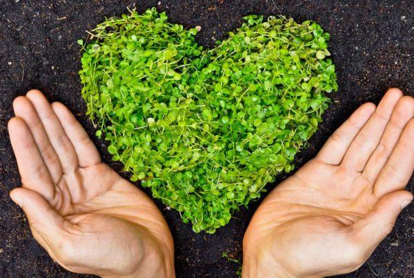 Eco-Friendly Waste Disposal